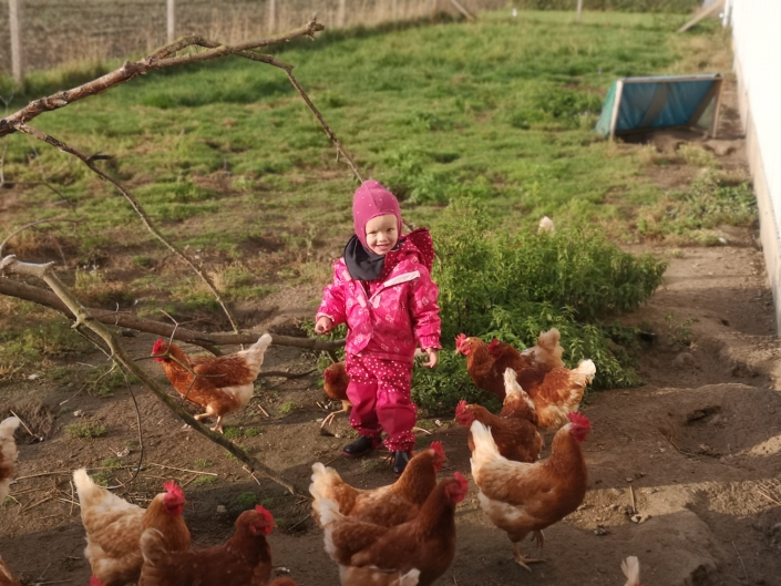 Lottes Hühner