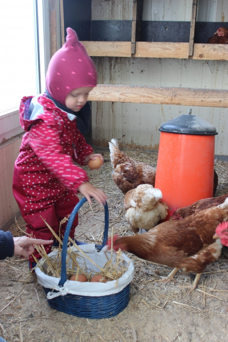 Eier sammeln